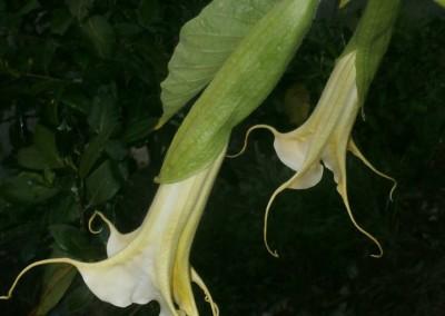 Ruffles & Flourishes X Bergkonigin Wedgwood Gardens